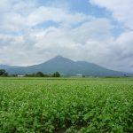 蕎麦畑と磐梯山