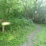 植物群落への道