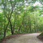 安ヶ森林道(福島県側)