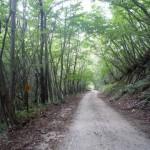 安ヶ森林道2(福島県側)