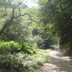 安ヶ森峠のダート