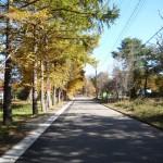 観音沼への道