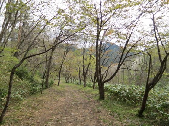 滝沢峠の道