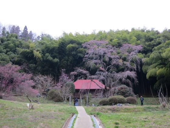 雪村庵は竹藪の色がよかった